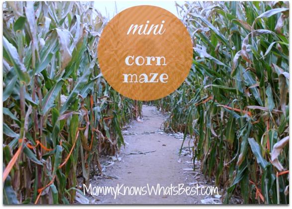 corn maze at Robas