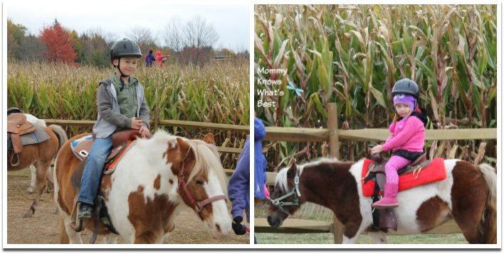 pony rides at robas