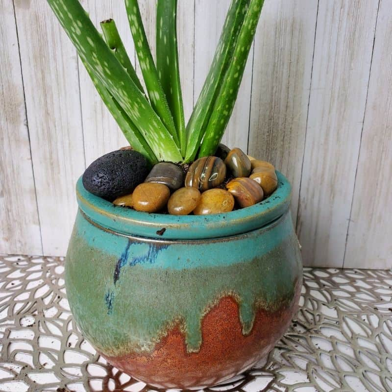 DIY Aloe Vera Succulent Diffuser
