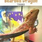 Bearded Dragon Supplies Checklist
