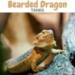 Bearded Dragon Supplies and Accessories Checklist