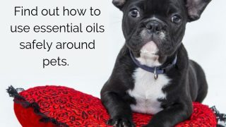 Are Essential Oils Safe for Pets? A Basic Guide for Pet Parents