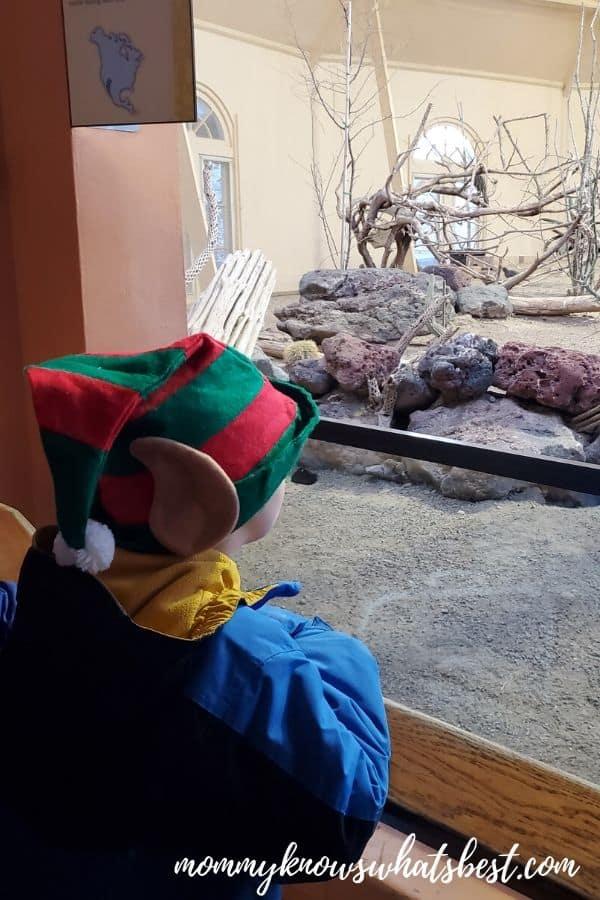 Hersheypark Christmas Candylane ZooAmerica
