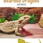 Is a Bearded Dragon a Good Pet Pros Cons