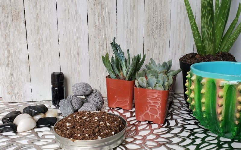 what you need for a succulent diffuser