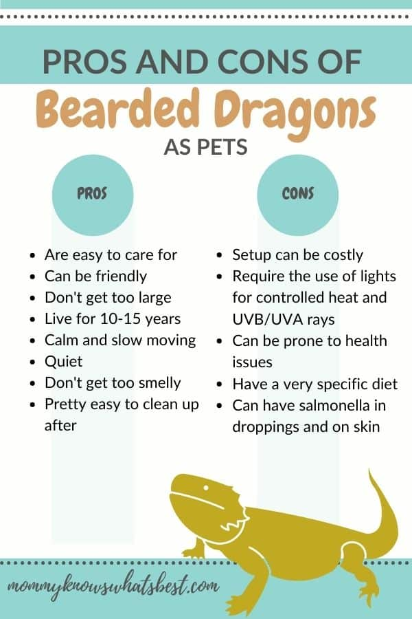 Pros and Cons of Bearded Dragons as a Pet