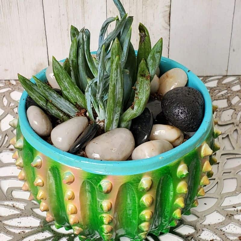 DIY Succulent Diffuser with Essential Oils and Lava Stones