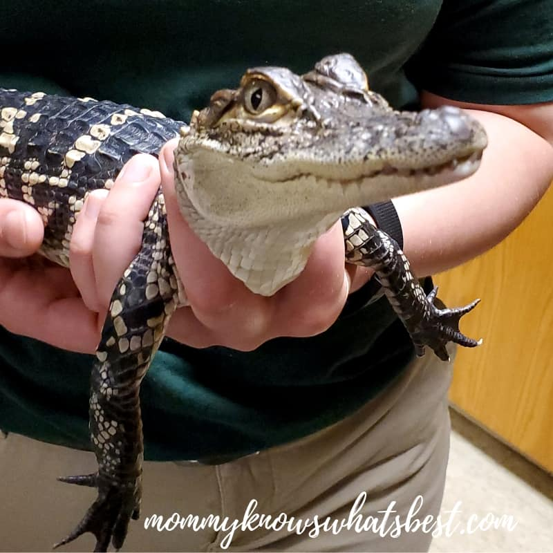 Feed Animals, Touch Reptiles, and More at ZooAmerica in Hershey, PA