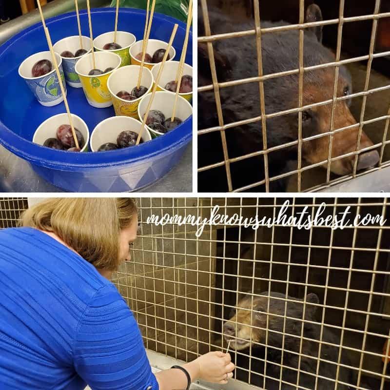 ZooAmerica Animals Feeding the Bears