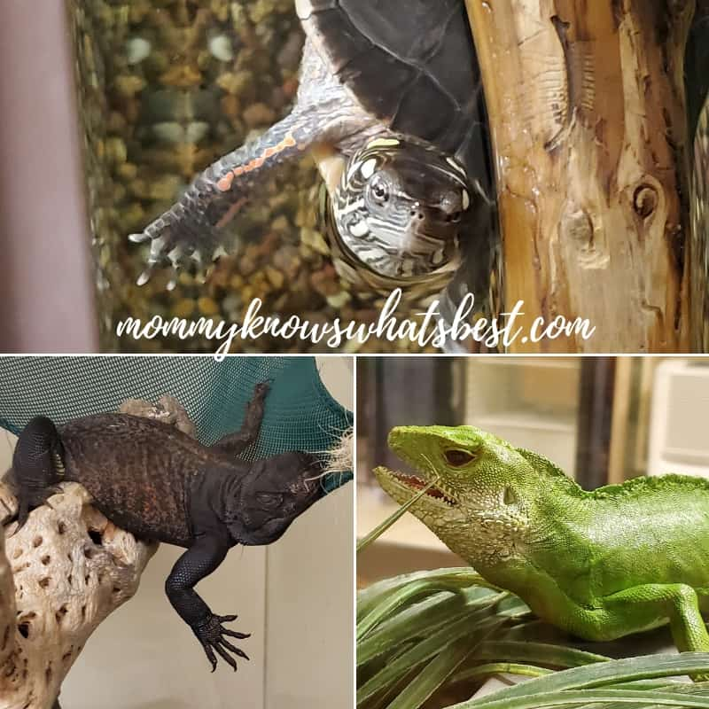 ZooAmerica Animals Lizards and Painted Turtle