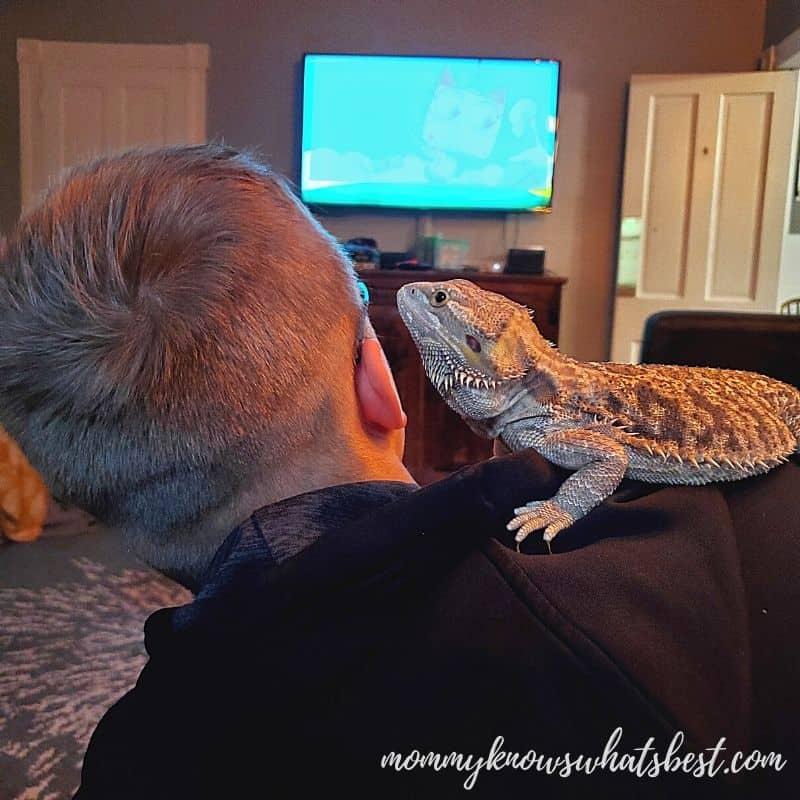 bearded dragon on shoulder of boy